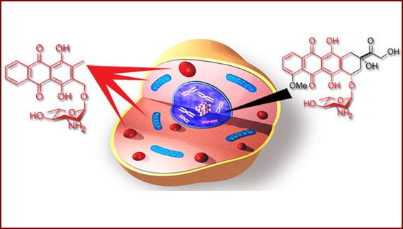 כימיה ביולוגית ותרופתית